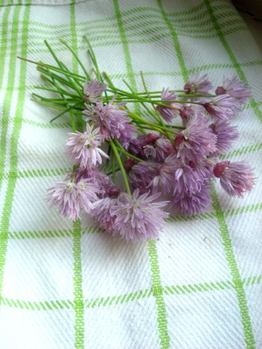 fresh cut chive flowers with stems