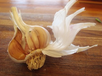 Knoblauch - Garlic