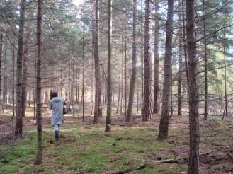 Berliner Wald