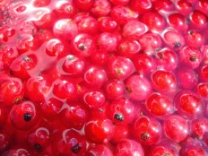 rinsing the red currant out