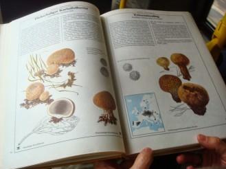 Pilz-Buch