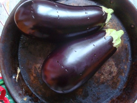 pricked aubergine skin