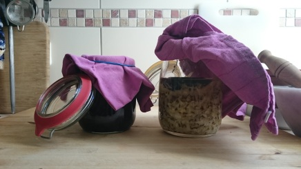 red cabbage and white cabbage in preserving jars, weighed down and covered with cotton cloth