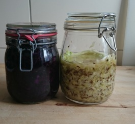 sauerkraut after a few days of fermentation